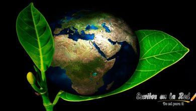 5 formas de ayudar a salvar el planeta tierra